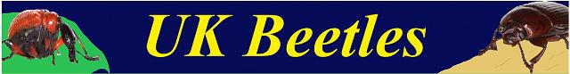 Screenshot 2021 01 21 Coleoptera Watford UK Beetles