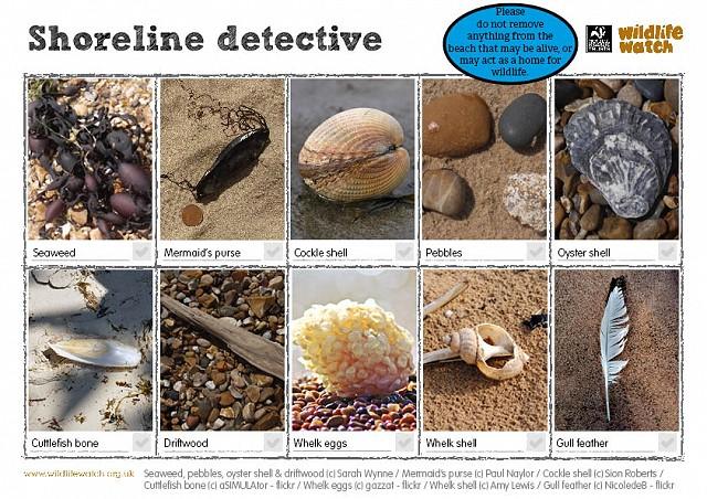Shoreline detective 1