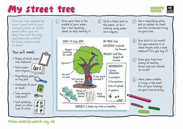 STREET TREE 800