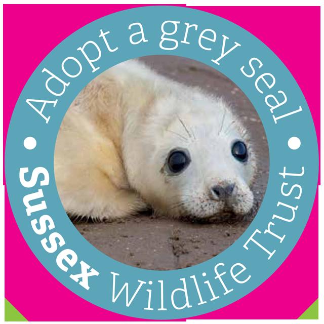 Adopt a grey seal