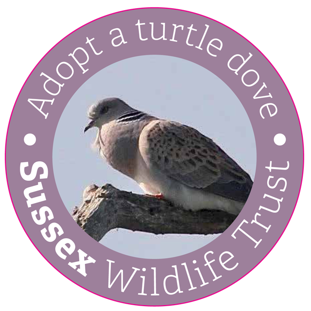 adopt a turtle dove