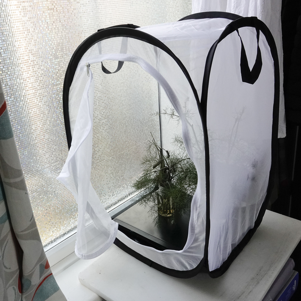 Swallowtail cage 4260
