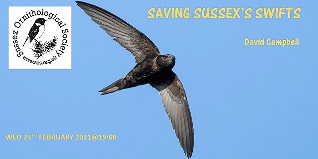 Saving Sussex's Swifts