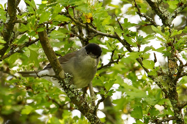 Birds at Woods Mill - Henfield (28/08/19)
