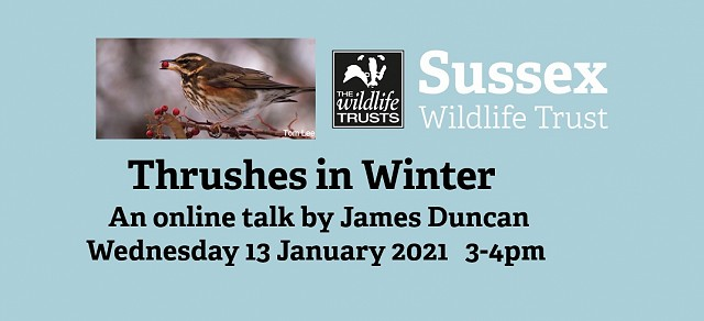 Thrushes in Winter