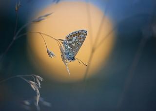 Twilight Blue © Emma Varley
