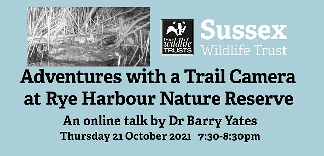 Adventures with a Trail Camera at Rye Harbour Nature Reserve
