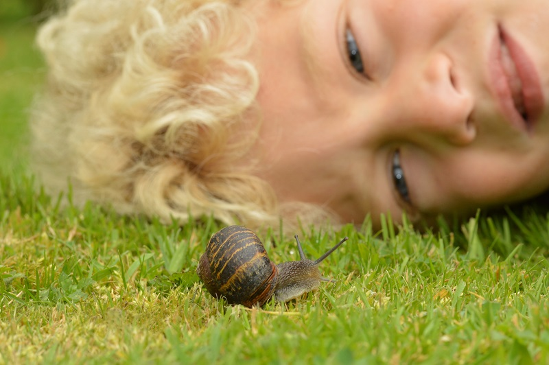 Web 1will snail