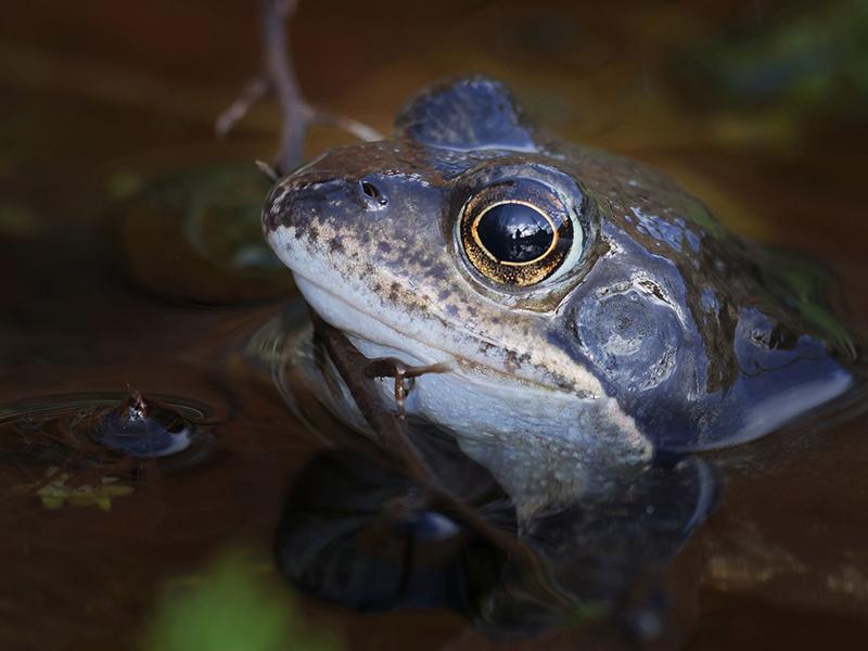 Web 202002   First frog   garden   P1294079