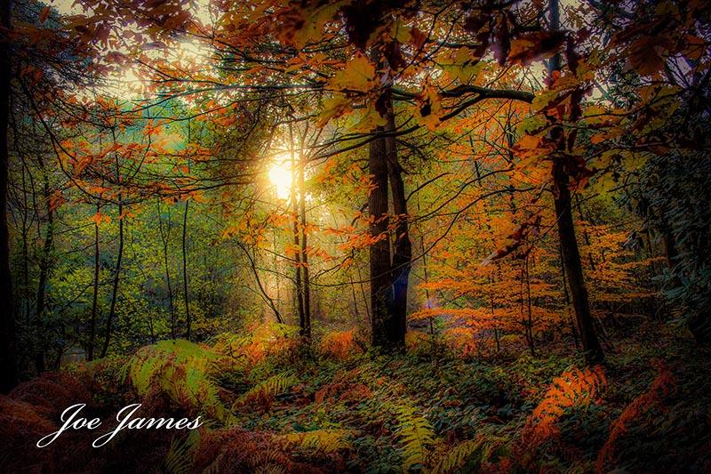 Websize orange forest (c) joe james