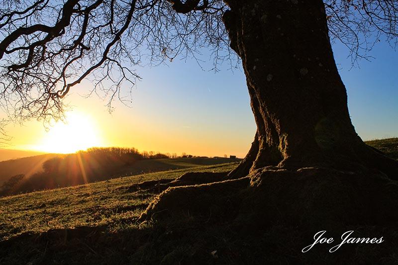Websize roots of the sun (c) joe james