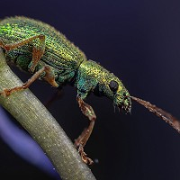 12. Weevil Wonder  - Paul Boyland