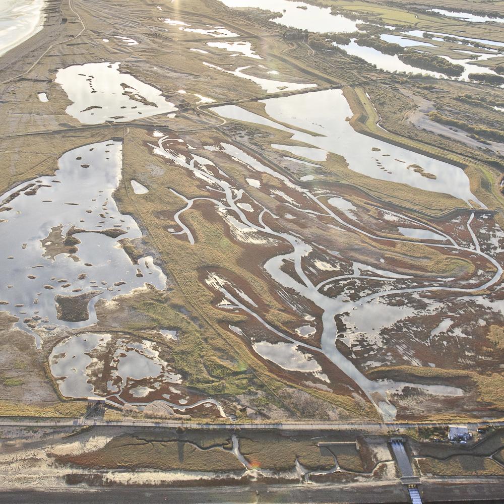 Wetland 1