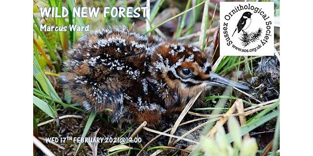 Wild New Forest