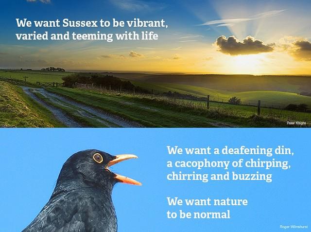 Wilder Sussex we want 1