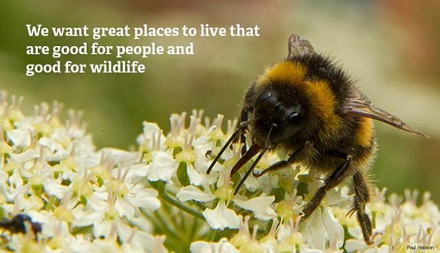 Wilder Sussex we want bee