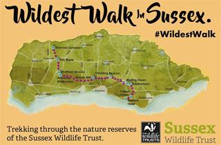 The Wildest Walk