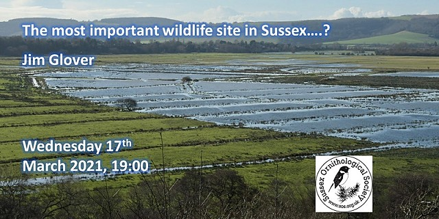 The most important wildlife site in Sussex...?