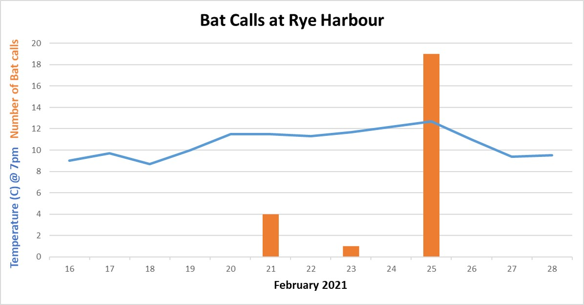 Winter Bats at Rye Harbour