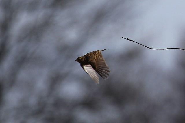 Sussex Half Day Bird Safari - Old Lodge & Weir Wood Reservoir (08/02/2019)